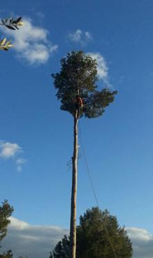 tala y poda de árboles
